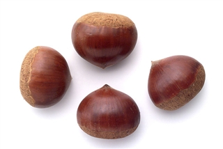 chestnut.jpg